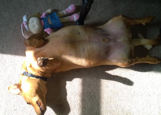 dog_in_sun