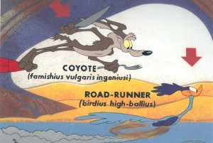 Road-Runner-Latin