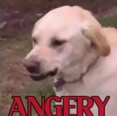Angery doggo